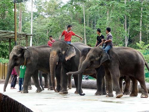 Elephant Orphanage Santuary