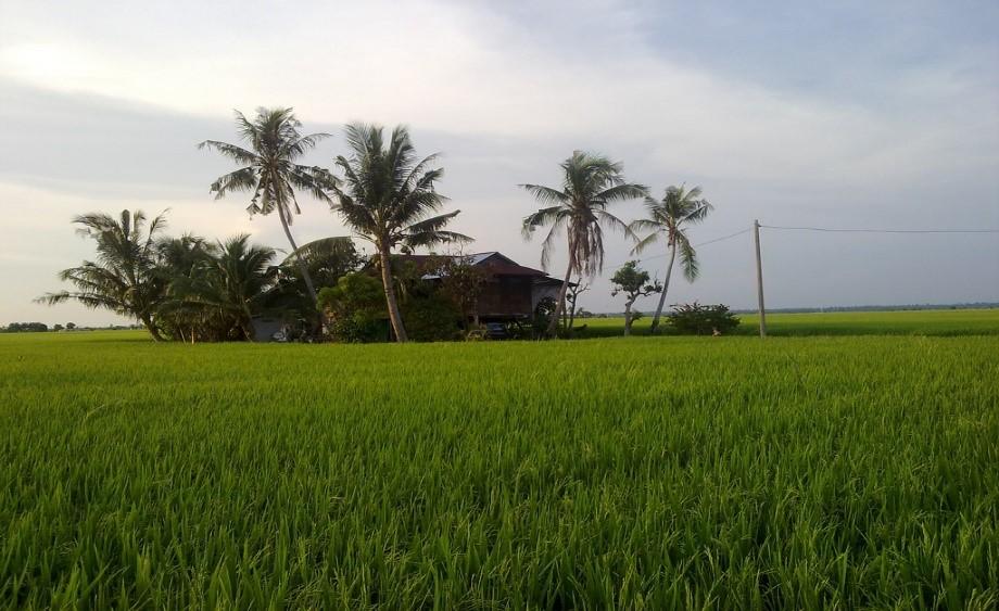 Paddy Fields, Fishing Village & Beach