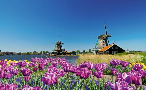 Tulips & Windmills