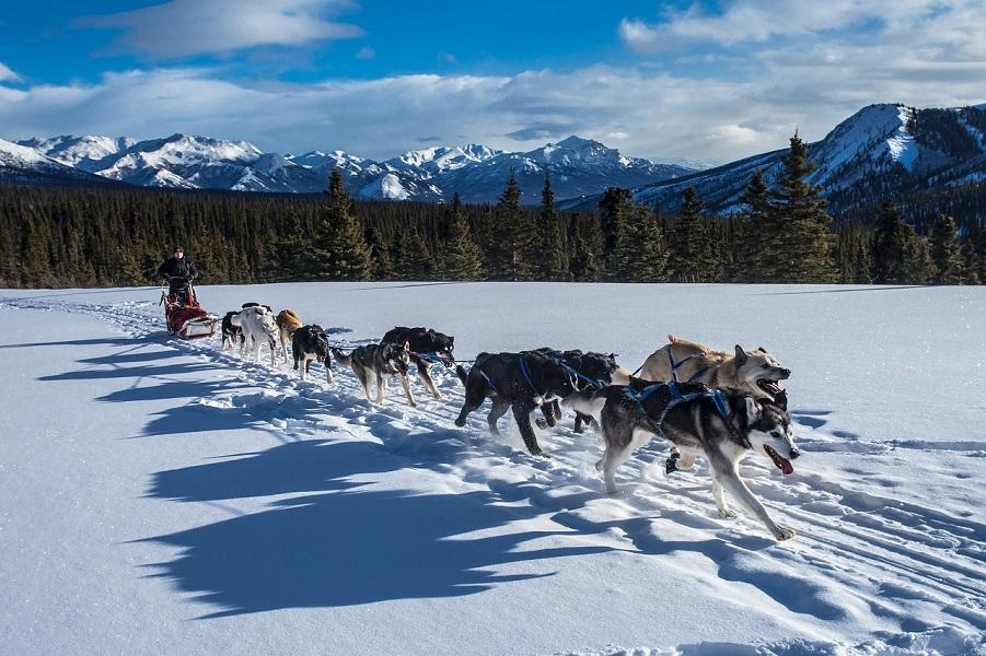 6D5N Dog Sledding in Nomads' Steppe