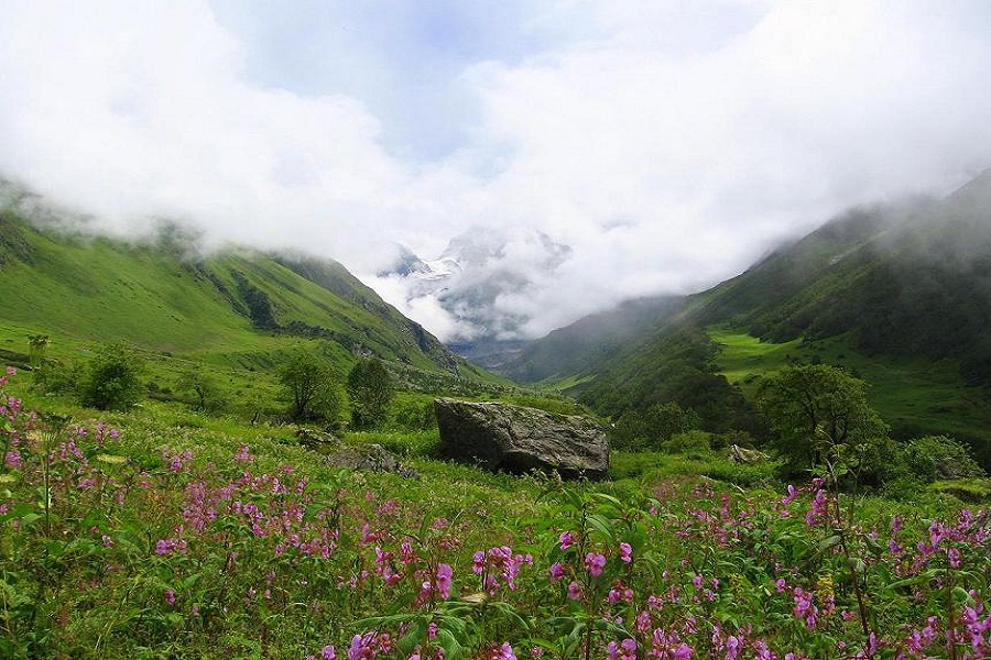 9D8N Valley of Flower - Himalaya Retreat (Treking)