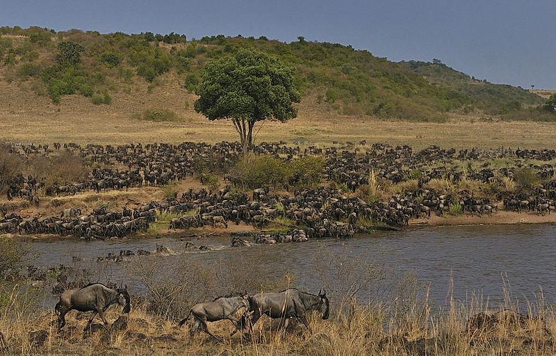10D9N Migration Safari