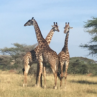 8D7N Kenya Wildlife Safari & Beach Holiday