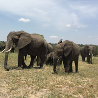 8D7N Kenya Wildlife Safari