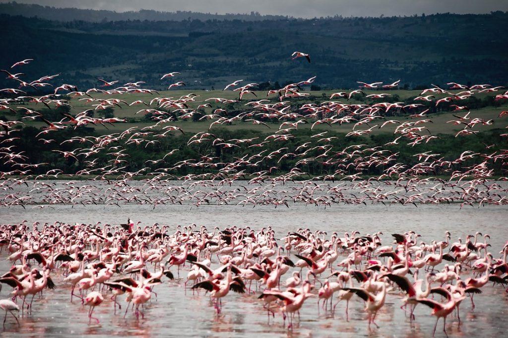 8D7N Kenya Wildlife Safari