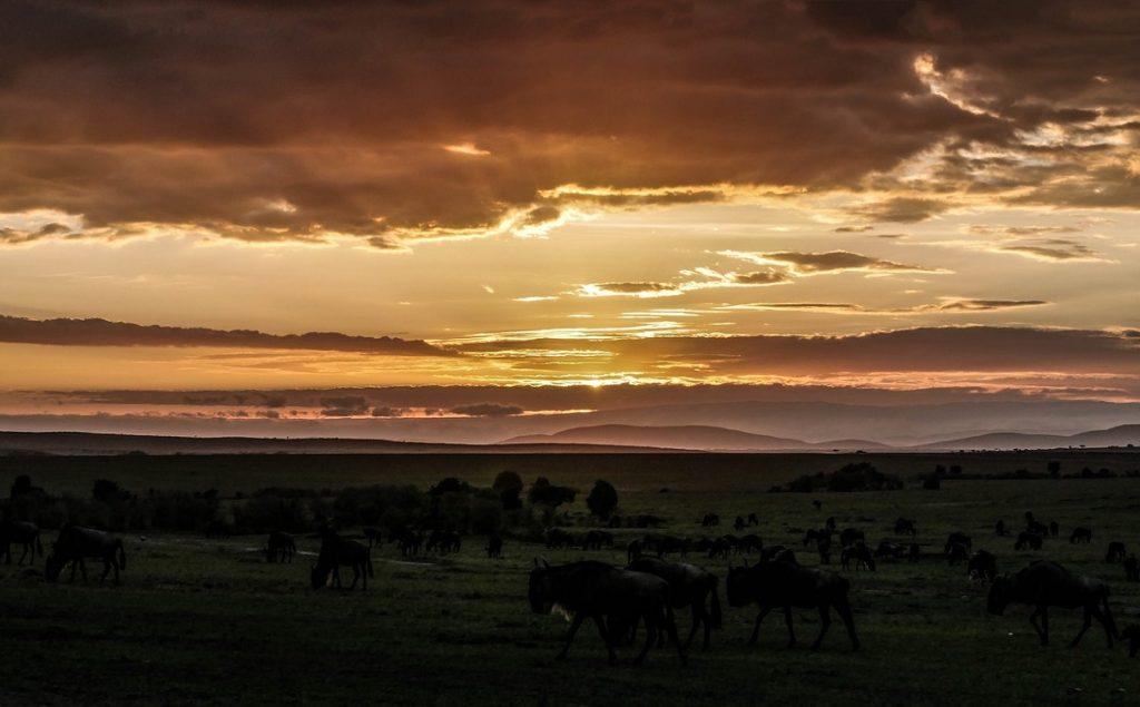 8D7N Kenya Wildlife Safari & Beach Holiday