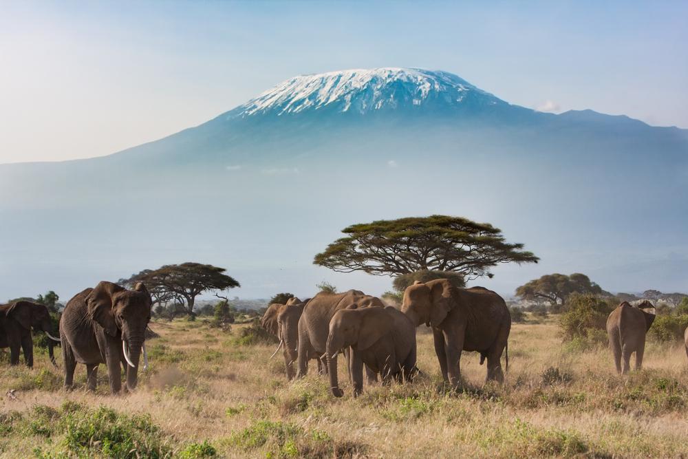 12D11N Kenya Wildlife Safari