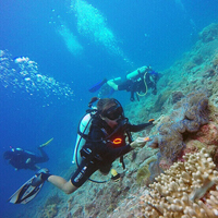 3D2N Pulau Tenggol (Diving)