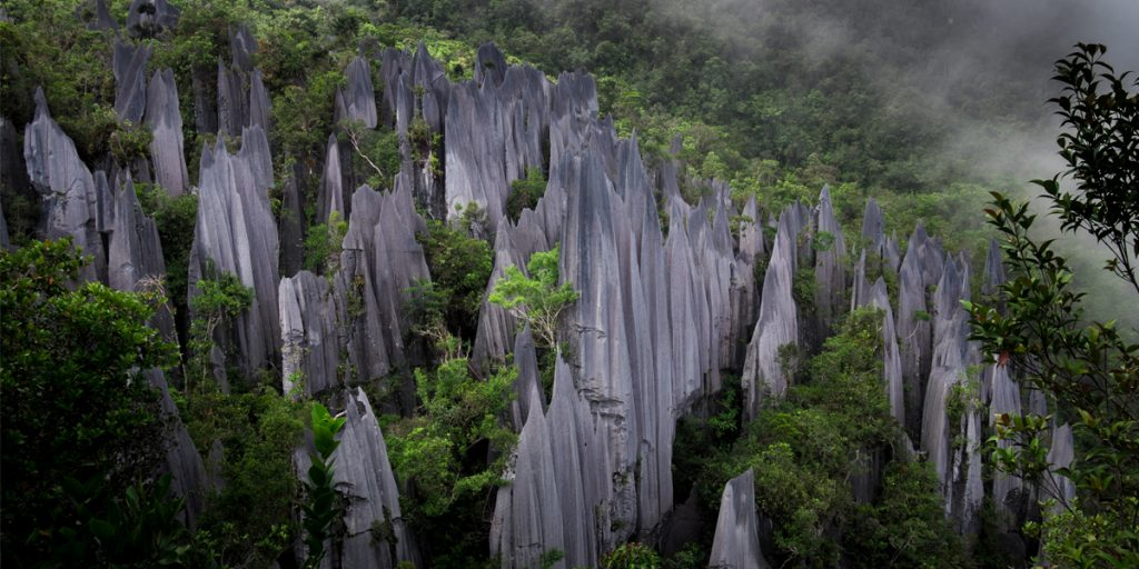 4D3N Amazing Mulu Pinnacles