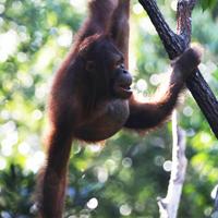 3D2N Wildlife of Borneo